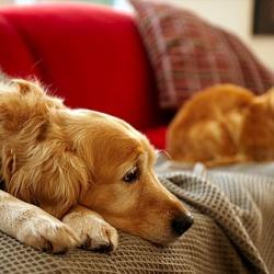 Kůže nebo látka - pes nebo kočka